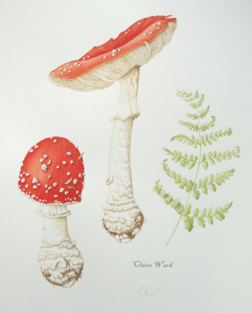Fly agaric with fern