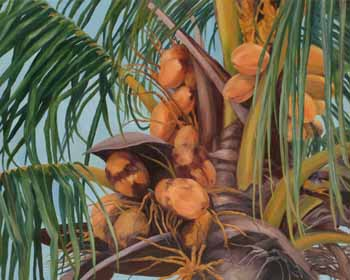 Cononut Palm Tree