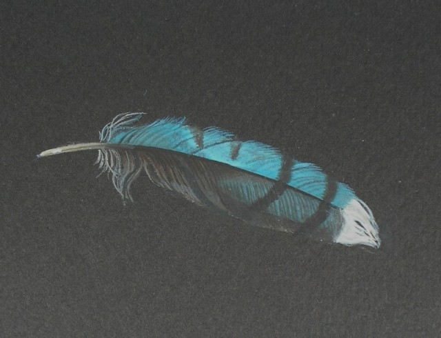 Feather: Blue Jay